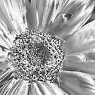 SolarFlower by Denny0976