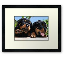 Two Rottweiler Puppies, High Five Framed Print
