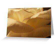 Parchment Petals, Rose, Tumut, Australia. Greeting Card