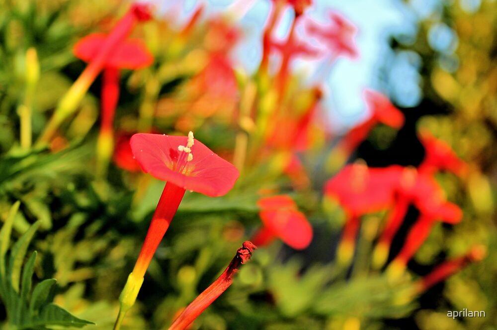Cypress Garden by aprilann