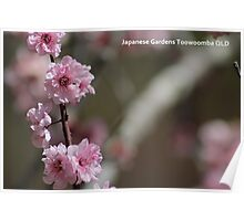 Cherry Blossom PC Poster