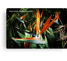 Bird Of Paradise PC Canvas Print