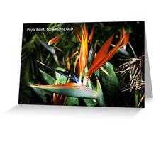 Bird Of Paradise PC Greeting Card