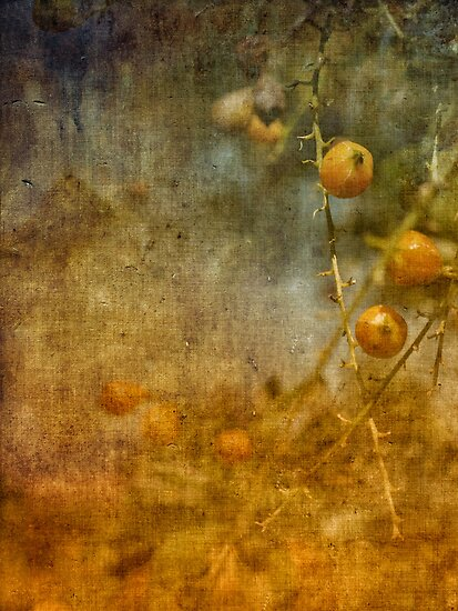 golden spring by © Karin  Taylor