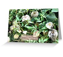 SILVER HEADS  a garden with a message for the elders! Greeting Card