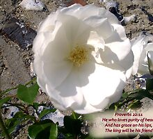 PURITY  White rose with a heart message by Shoshonan