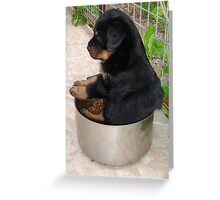 Rottweiler Puppy Sitting In A Bowl Of Food Greeting Card