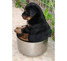 Rottweiler Puppy Sitting In A Bowl Of Food Photographic Print