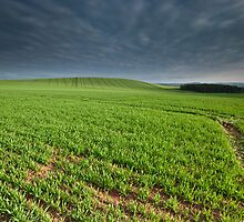 """Blackadder fields"" by Allan  England"