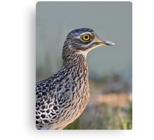 Thick-knee....... Canvas Print