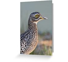 Thick-knee....... Greeting Card