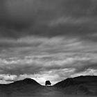 """Sycamore Gap on Hadrian's Wall"" by Allan  England"