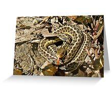 Juvenile Eastern Garter Snake - Thamnophis sirtalis Greeting Card