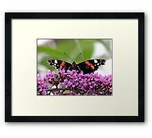 Red Admiral Butterfly 03 Framed Print