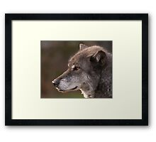 Profile of a Wolf Framed Print