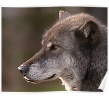 Profile of a Wolf Poster