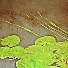 leaves by agawasa