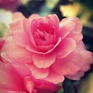 Pink Gem by Vanessa Barklay