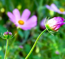 Just Pink by Brenda Dahl