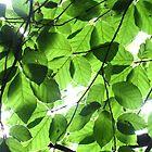 Leaf on leaf by ClaireWroe