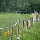 Fence by Mikael Andersson