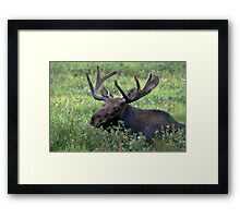 Resting in the willows Framed Print