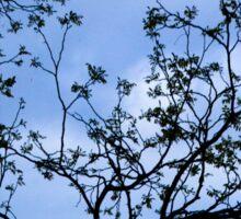 Branch silhouette Sticker
