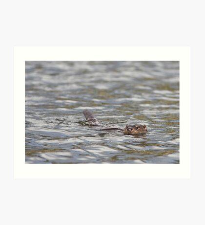 Scottish Otter Art Print