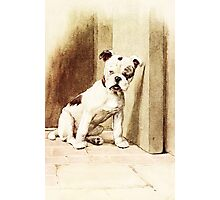 Cute Bulldog illustration Photographic Print