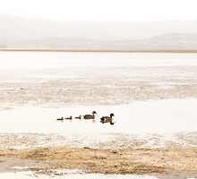 Ducks on a peaceful lake by John Kha