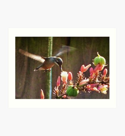 Hummingbird In Flight Part Deaux Art Print