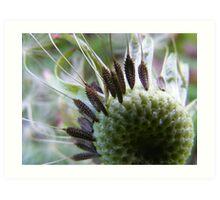 Dandelion seeds before flight Art Print