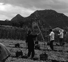 BW China Guilin watering with liquid manure 1970s by blackwhitephoto