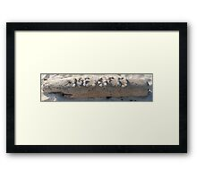 Mexico Driftwood Framed Print
