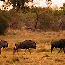 Line astern by Explorations Africa Dan MacKenzie