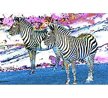 Duo Zebras Photographic Print