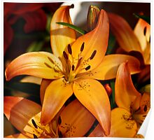 Orange Lili Poster
