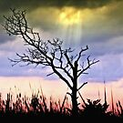 Silhouette of Solitude by Donnie Voelker