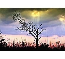 Silhouette of Solitude Photographic Print