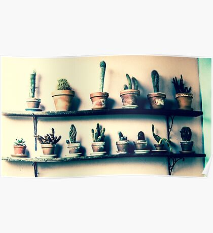 CACTUS IN ROW!!! Flowers Poster