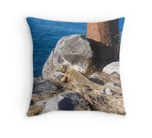Land iguana. Throw Pillow
