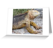 Land iguana1. Greeting Card