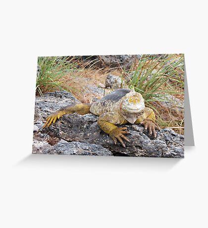 Land iguana 3. Greeting Card