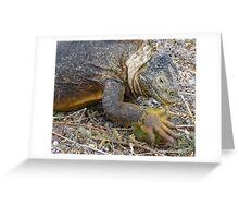 Land iguana 4. Greeting Card