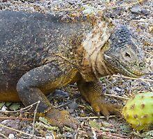 Land iguana 5. by Anne Scantlebury