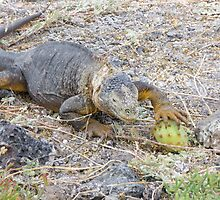 Land iguana 6. by Anne Scantlebury
