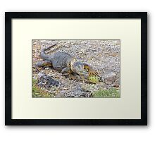 Land iguana 6. Framed Print
