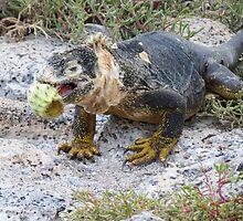 Land iguana 7. by Anne Scantlebury