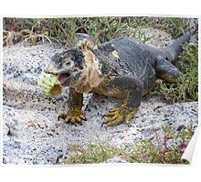 Land iguana 7. Poster