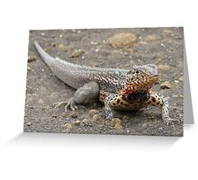 Land iguana on Santa Cruz. Greeting Card